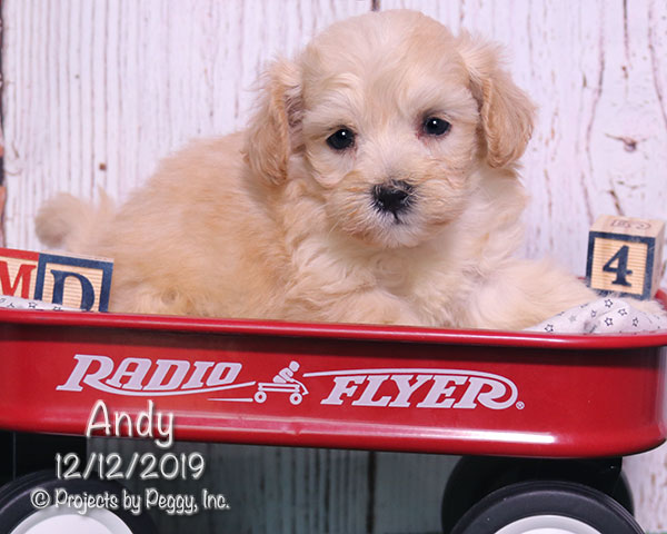 Andy – [Ryder] (M) – Reserved