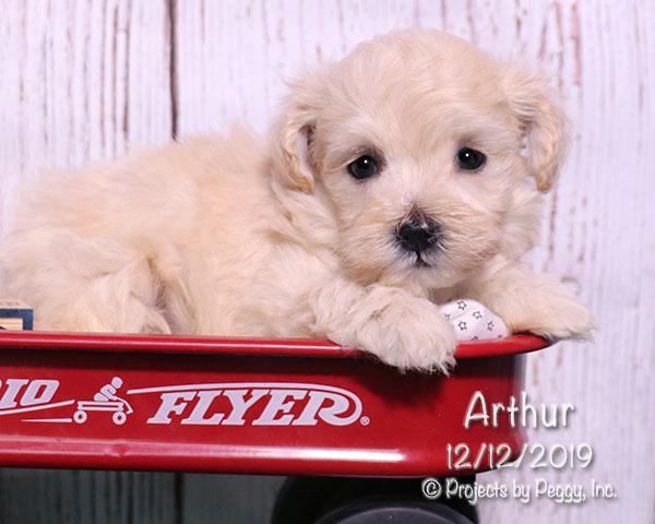 Arthur (M) – Sold