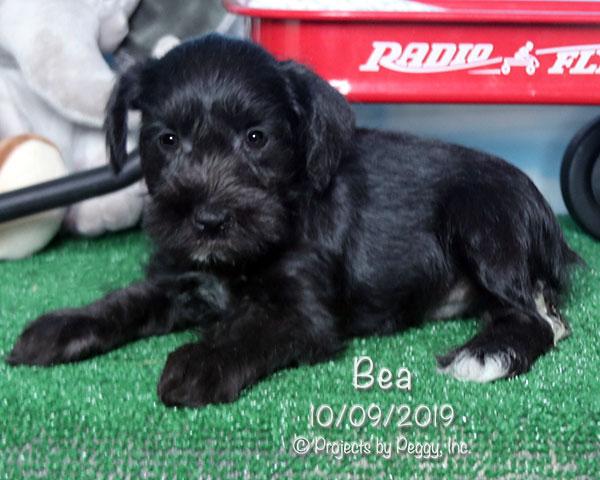 Bea (F)