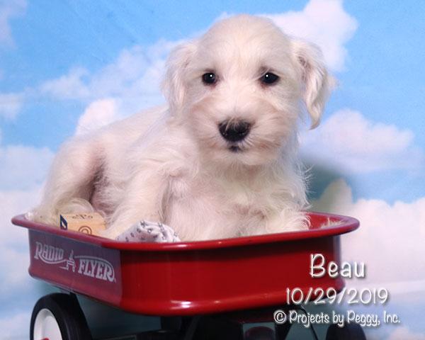 Beau (M)