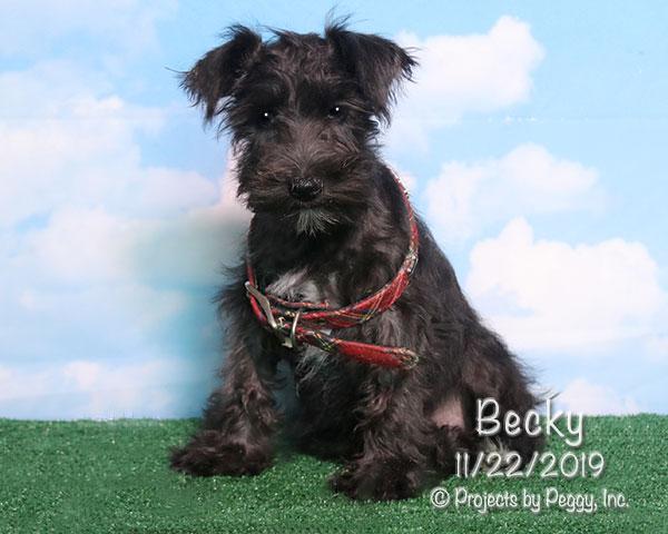 Becky (F)