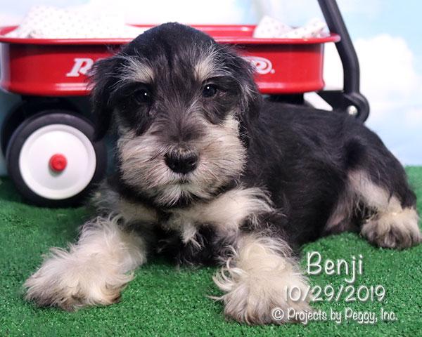 Benji (M) – Sold