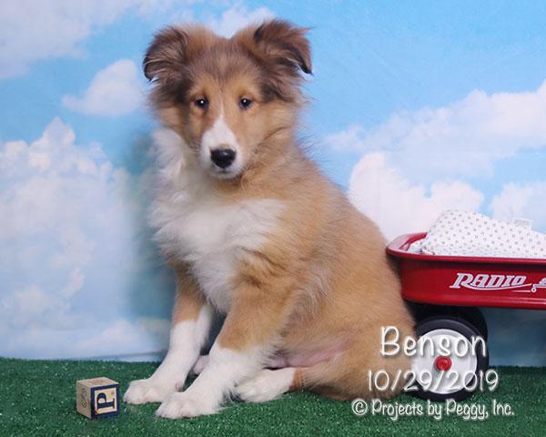Benson (M) – Sold
