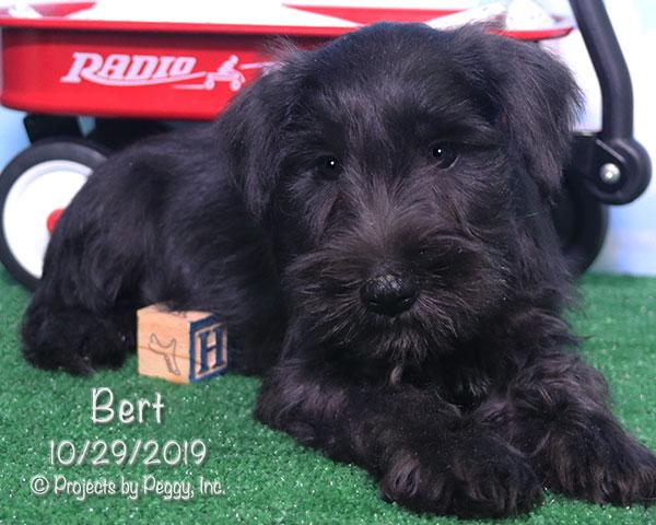 Bert (M)