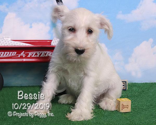 Bessie (F) – Reserved