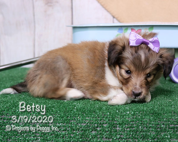 Betsy (F) – Reserved