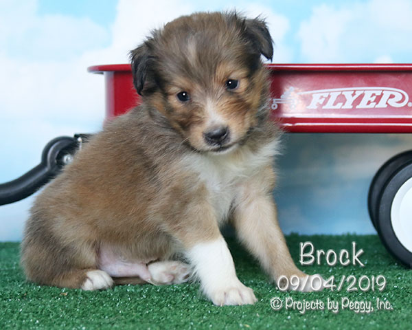 Brock (M) – Sold