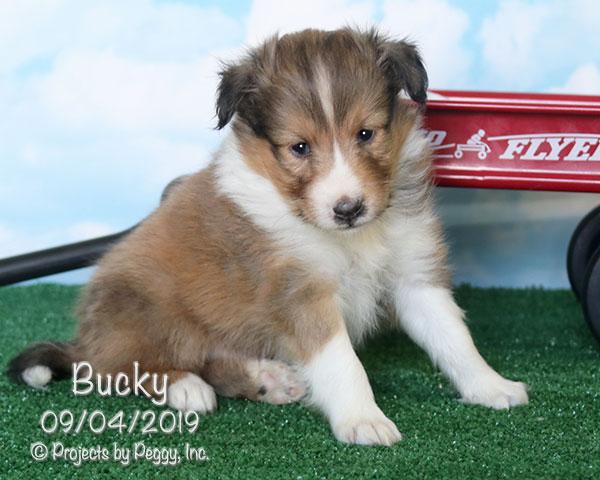 Bucky (M)