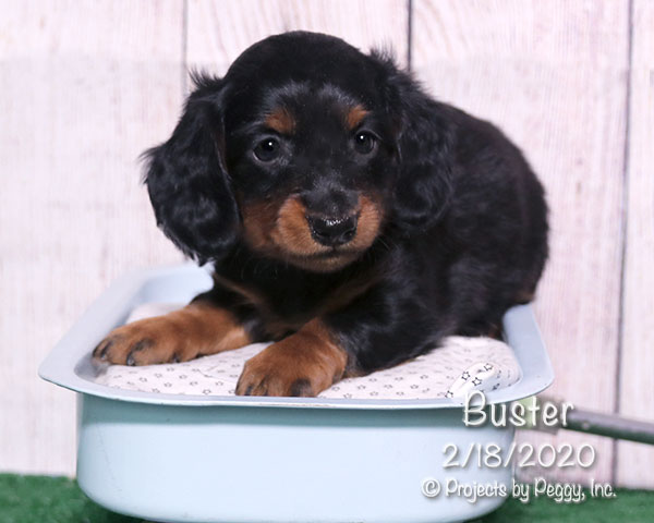 Buster (M) – Sold