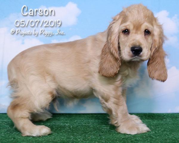 Carson (M)