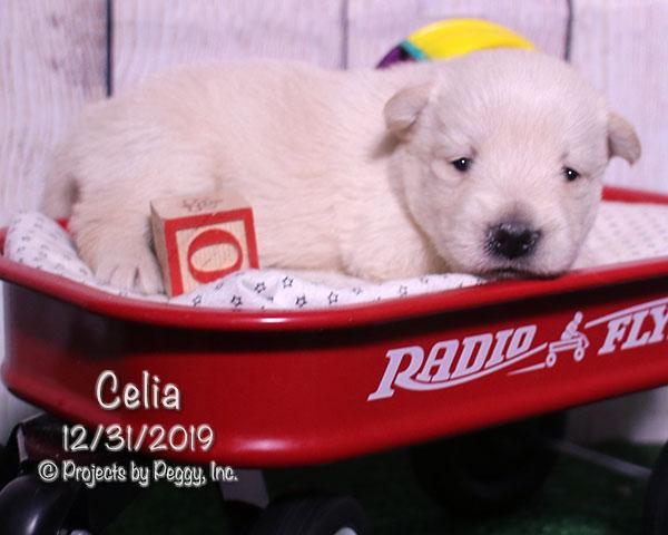Celia (F)
