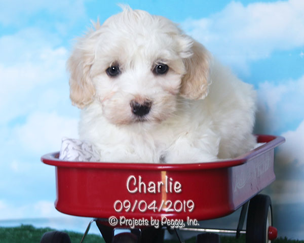 Charlie –  [McCarthy] (M) – Reserved