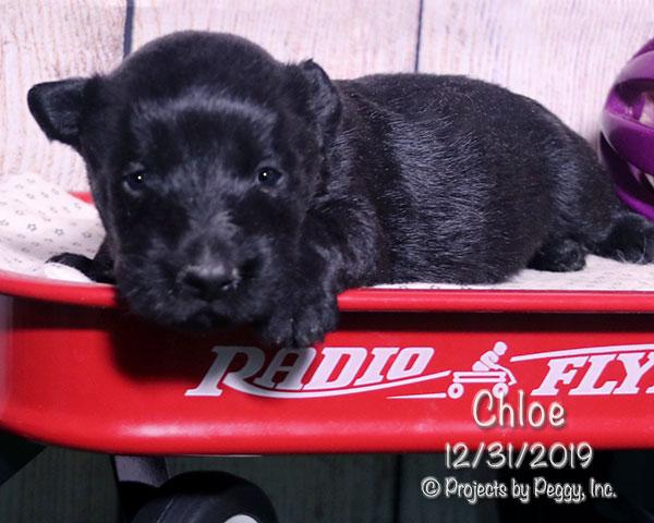 Chloe (F) – Reserved