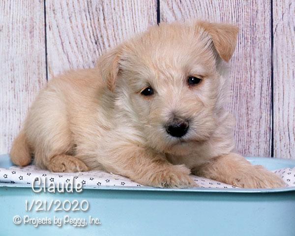 Claude (M)