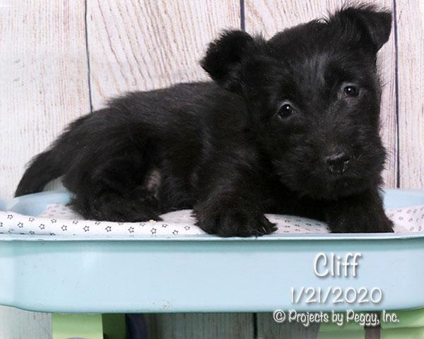Cliff (M)