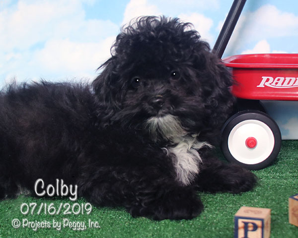 Colby (M)