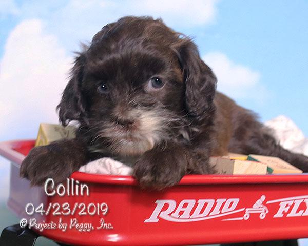 Collin (M)