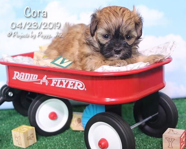 Cora (F) – Sold
