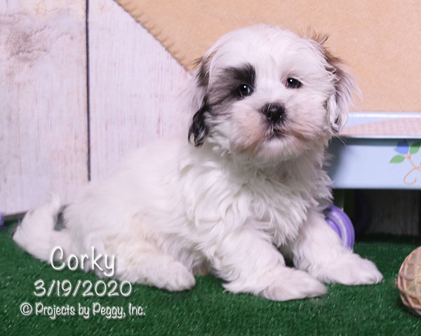 Corky (M) – Reserved