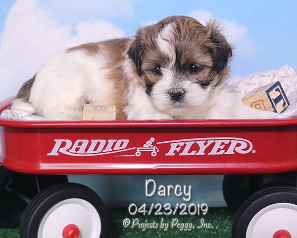 Darcy (F) -Reserved