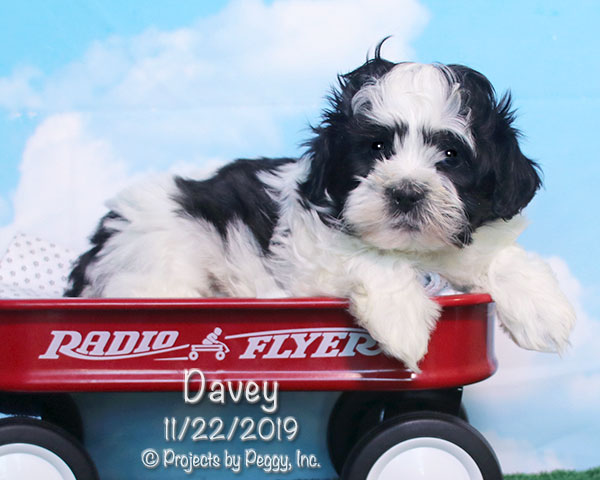 Davey (M) – Reserved