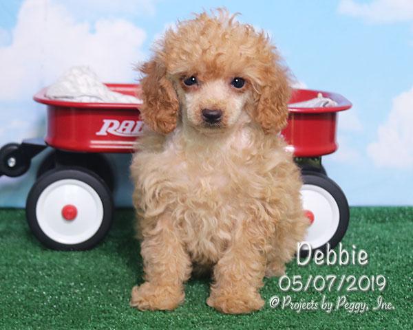 Debbie (F)