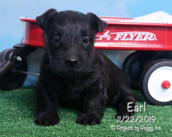 Earl (M)