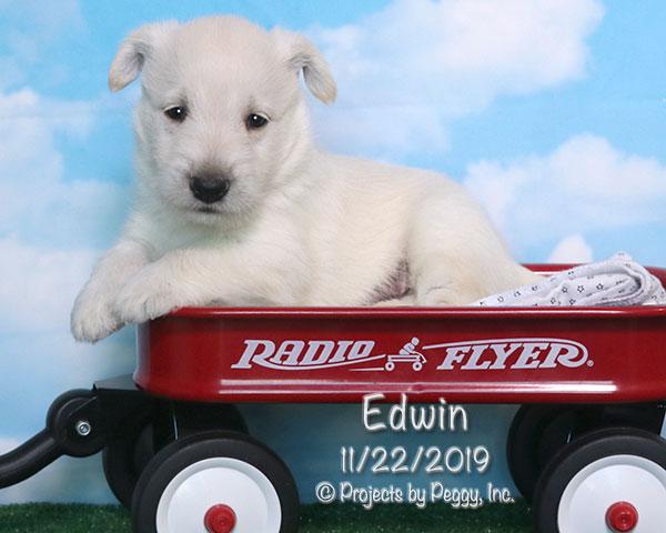 Edwin (M)