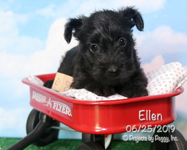 Ellen (F) – Reserved