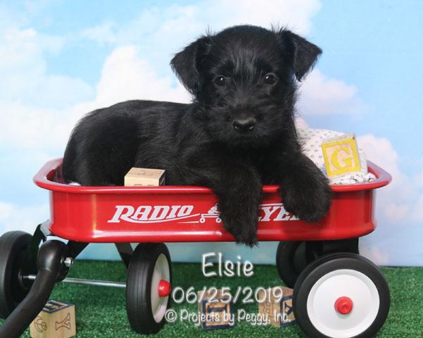 Elsie (F)