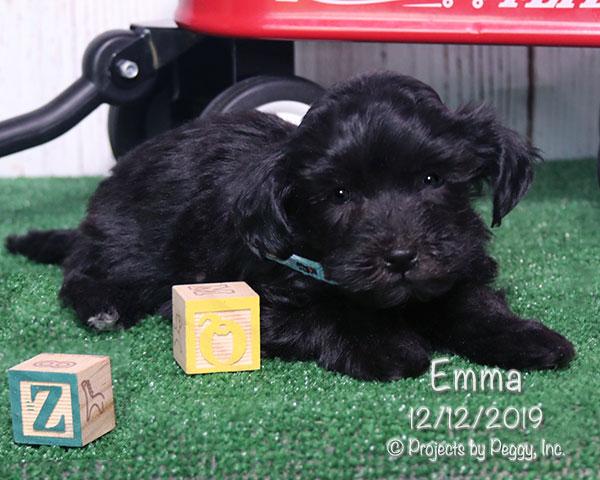 Emma (F) – Reserved