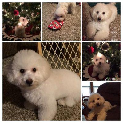 Finn's First Christmas!