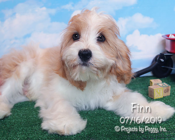 Finn (M)