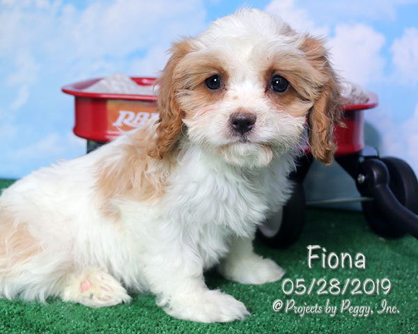 Fiona (F) – Sold