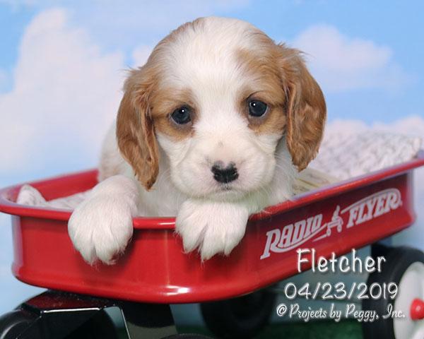 Fletcher (M)