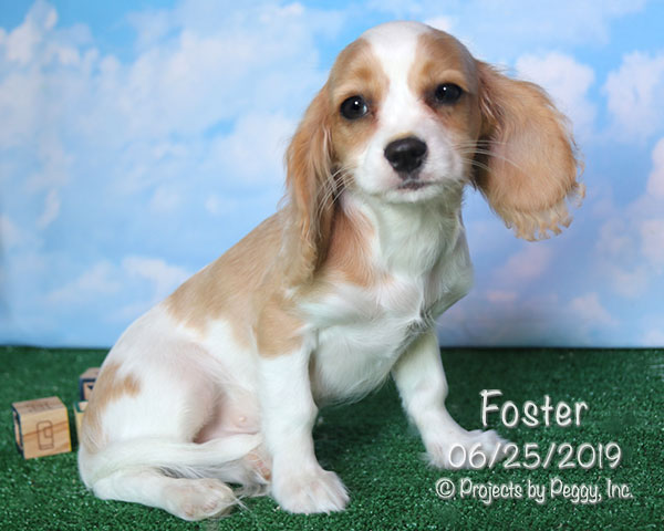 Foster (M)