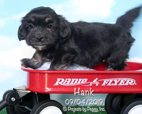 Hank (M)