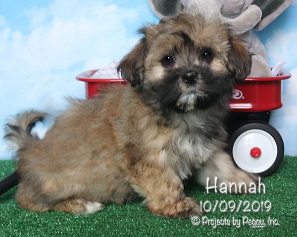 Hannah (F)