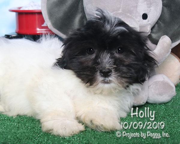 Holly (F)