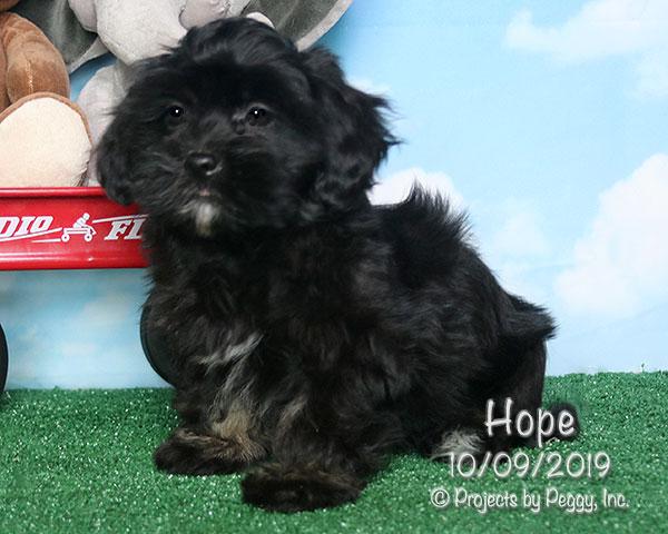 Hope (F)