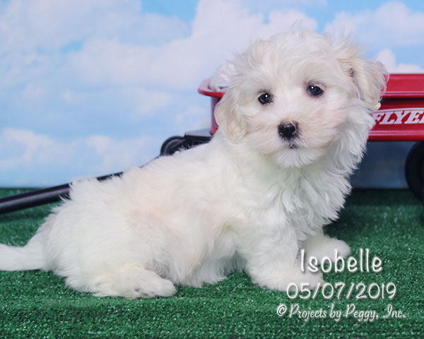 Isobelle (F)