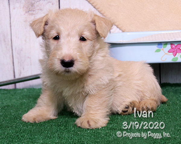 Ivan (M) – Reserved