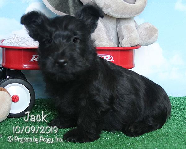 Jack (M)