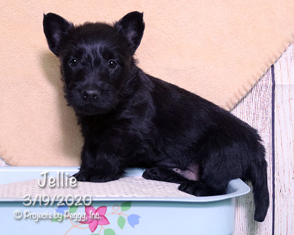 Jellie (F) – Reserved
