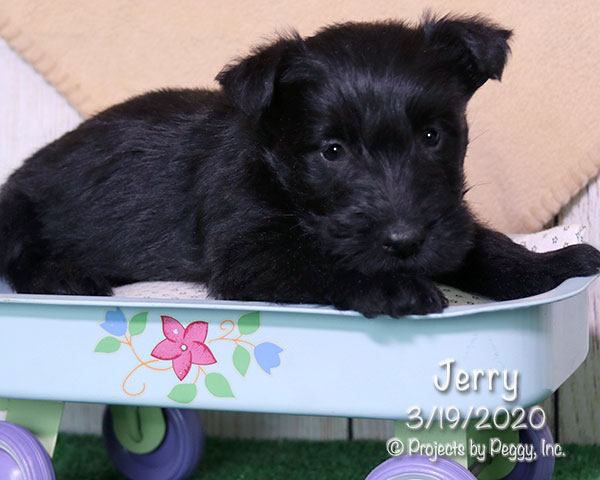 Jerry (M) – Reserved