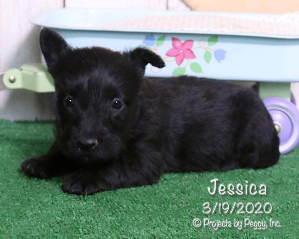Jessica (F) – Reserved
