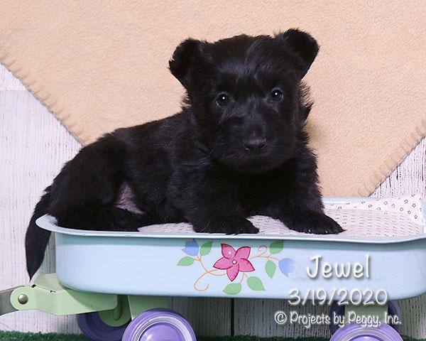 Jewel (F) – Reserved