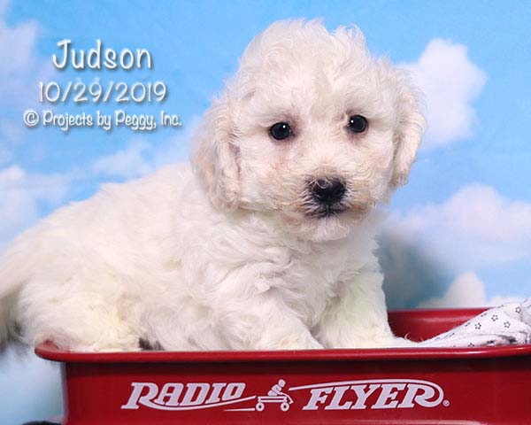 Judson (M)