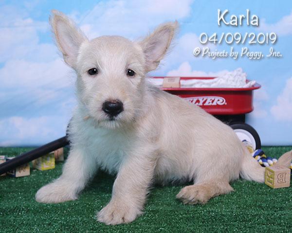 Karla (F) – Reserved