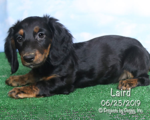 Laird (M) – Reserved